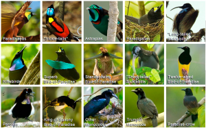 Birds-of-Paradise Project